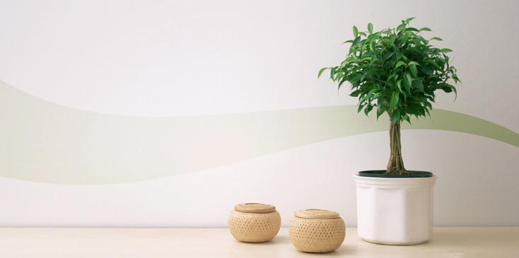 8 astuces feng shui pour se sentir bien chez soi - Plantes depolluantes pour la maison ...